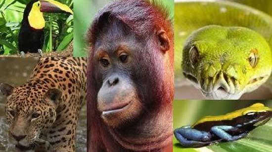 Rainforest Awareness Month | Divine Organics