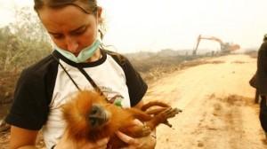 indonesien-affenbaby