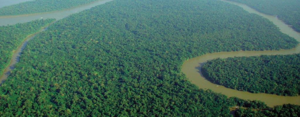 web-rainforest-no-text